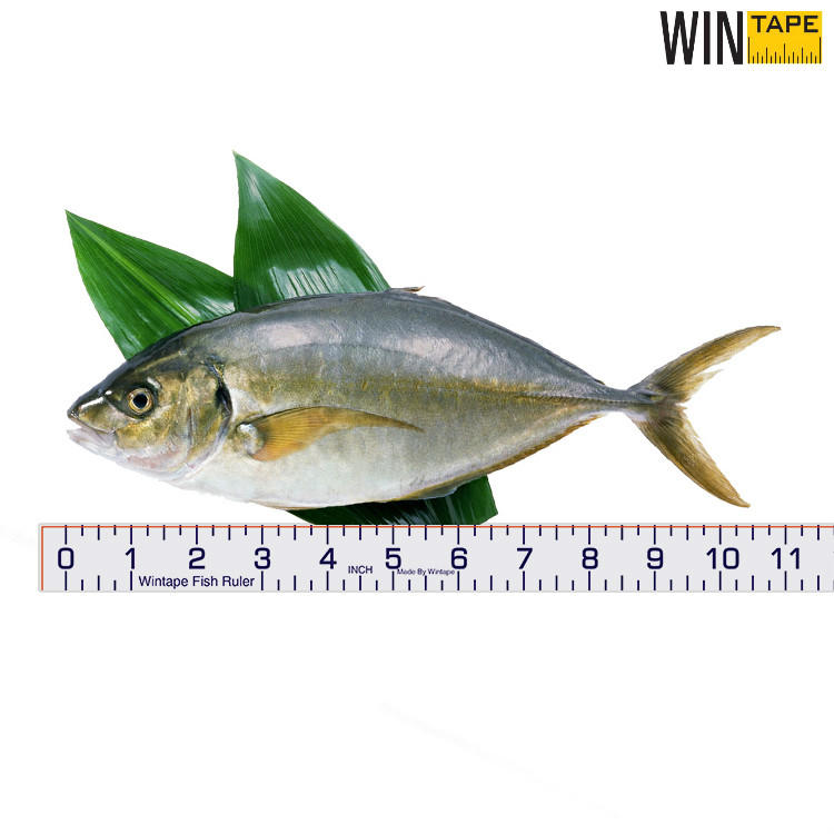 Adhesive Fish Ruler In Stock